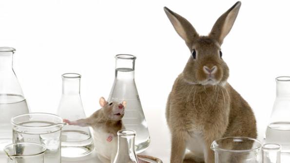 testes com animais - rato e coelho
