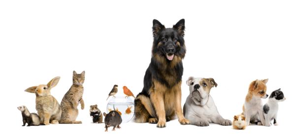 testes com animais - cães, gatos, coelhos, etc.