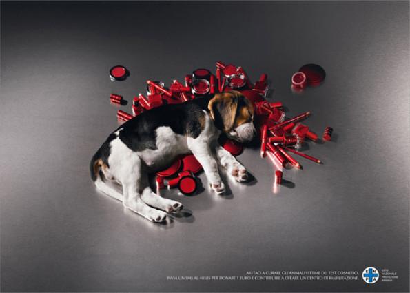 testes com animais - cão e cosmeticos