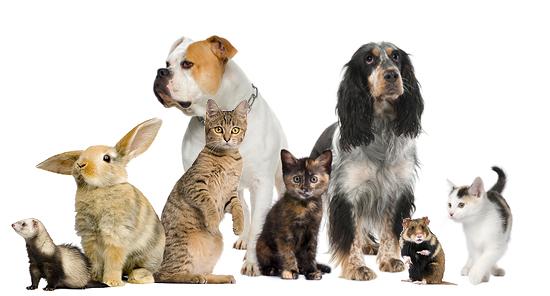 testes com animais - cães, gatos, coelho, etc.